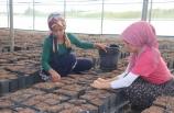 Çukurova'da yetiştirilen meyve fidanları 14 ülkeye ihraç ediliyor