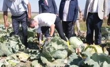 İki bin rakımlı Daphan Ovası'ndaki seralarda sebze ve meyve hasadına başlandı