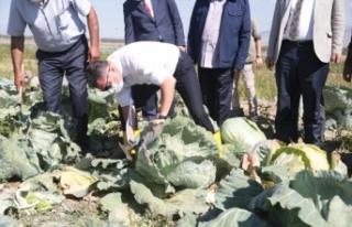 İki bin rakımlı Daphan Ovası'ndaki seralarda sebze...