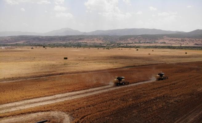 Verimsiz toprağa can veren aspir, alternatif gelir olacak